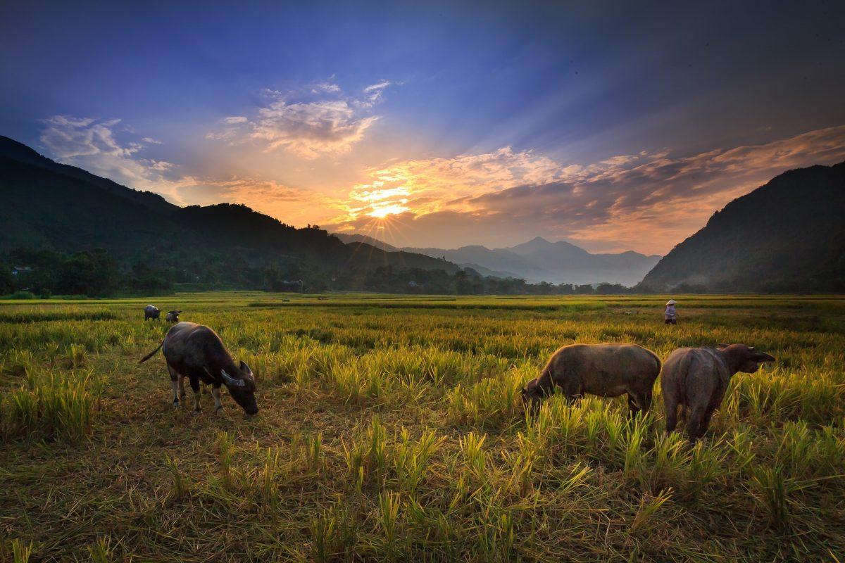 Thajsko (53)