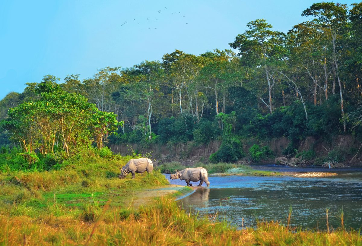 Wild landscape with asian rhinoceroses