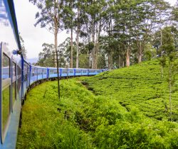 A train goes through tea plantation in Nuwara Eliya district, Sri Lanka. Tea production is one of the main sources of foreign exchange for Sri Lanka (formerly called Ceylon)