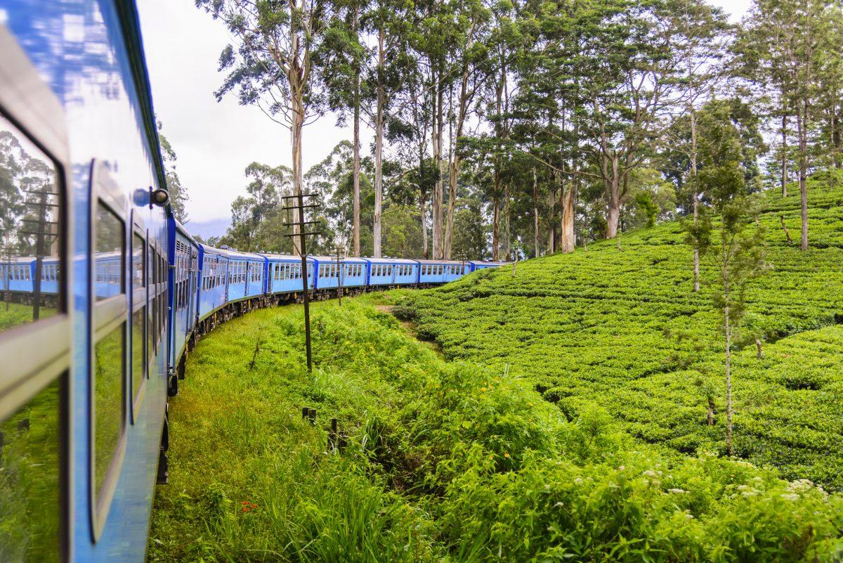 Tea plantation in Nuwara Eliya district, Sri Lanka